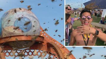 Bild zu Bienen, Festival, Michigan,