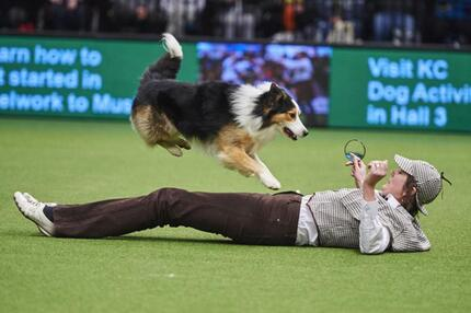 Crufts Dog Show in Birmingham