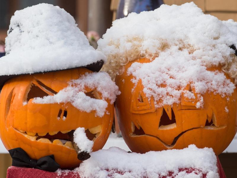 Bild zu Kürbisse im Schnee