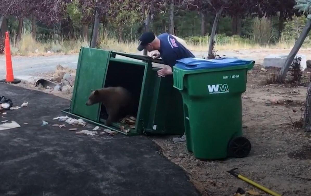 Bild zu Müllcontainer