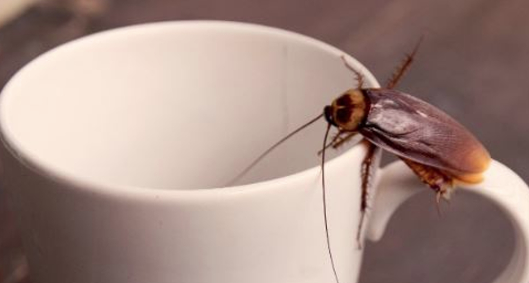 Bild zu Kakerlaken, Milch,