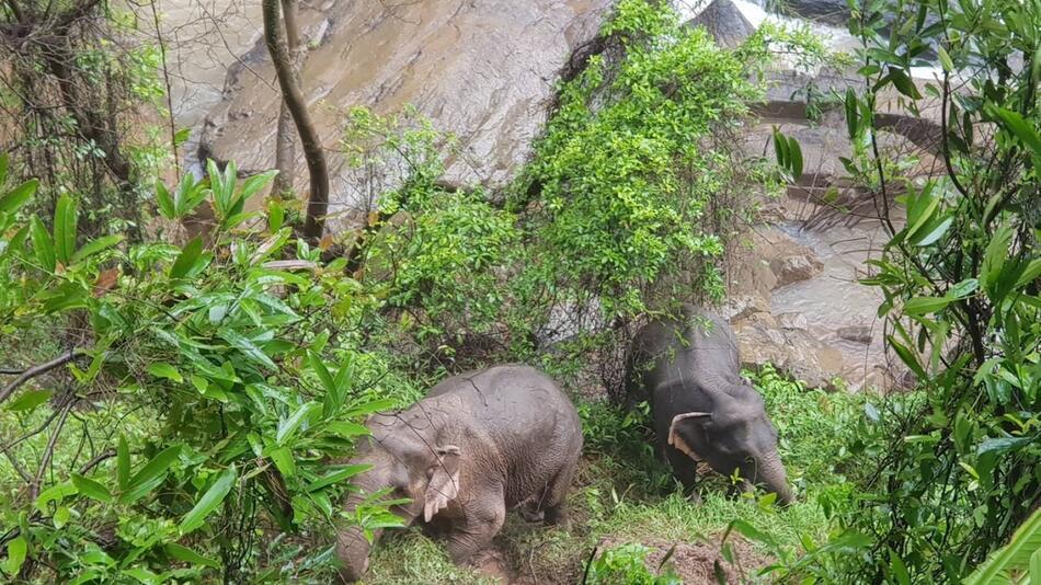 Sech Elefanten ertrinken im Wasserfall
