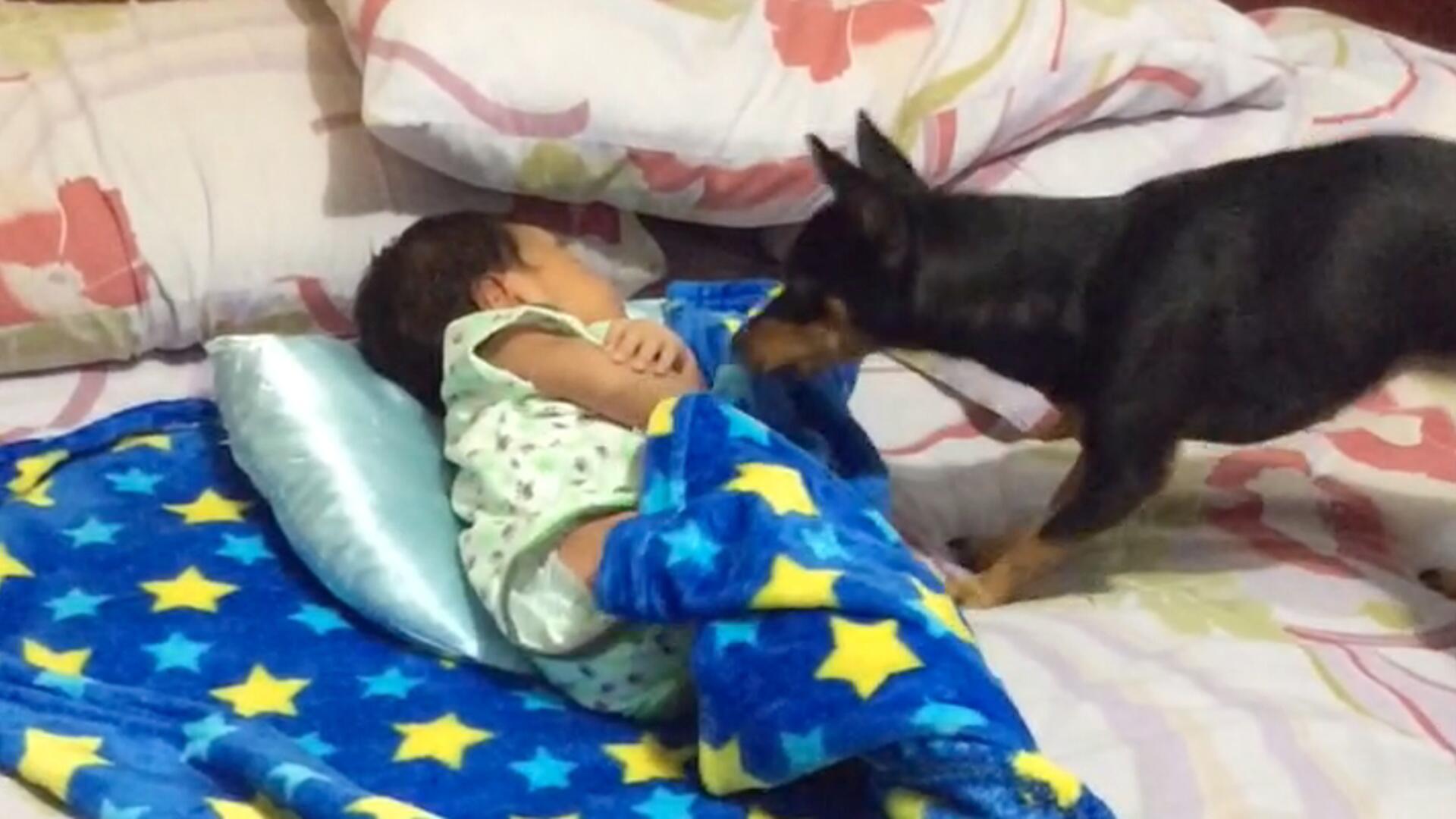 Bild zu Hund deckt Baby zu
