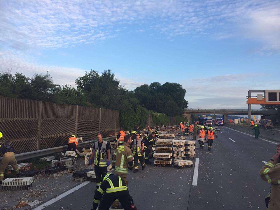 Bild zu Westautobahn, Sperrung, Unfall, Hühner