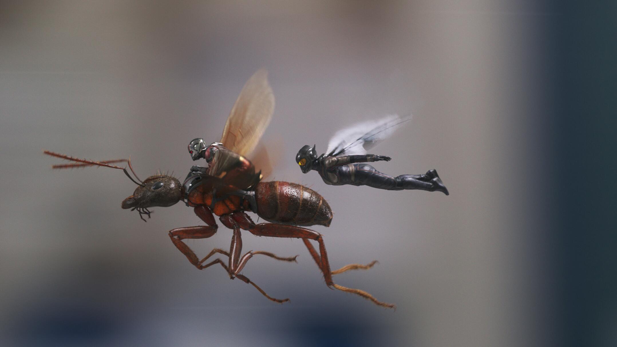 Bild zu Abt-Man and the Wasp