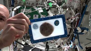 Bild zu Keks, ISS, Weltraum