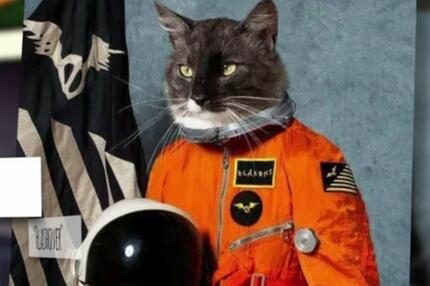 Die besten Albumcover mit Katzen