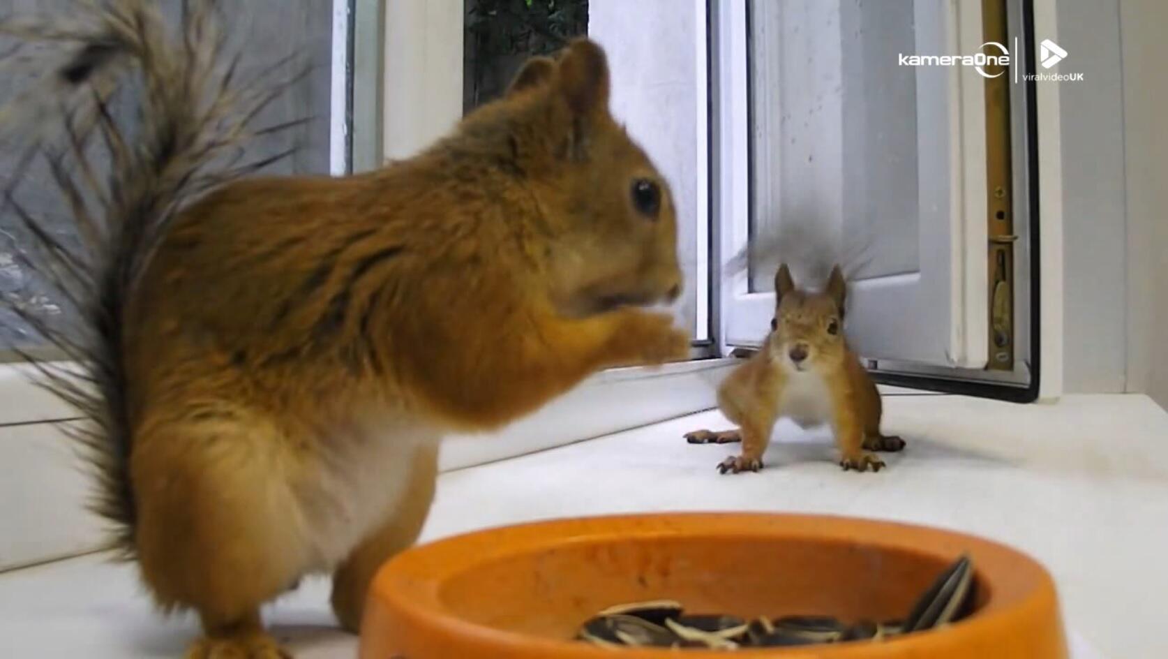 Bild zu Eichhörnchen, Futter,