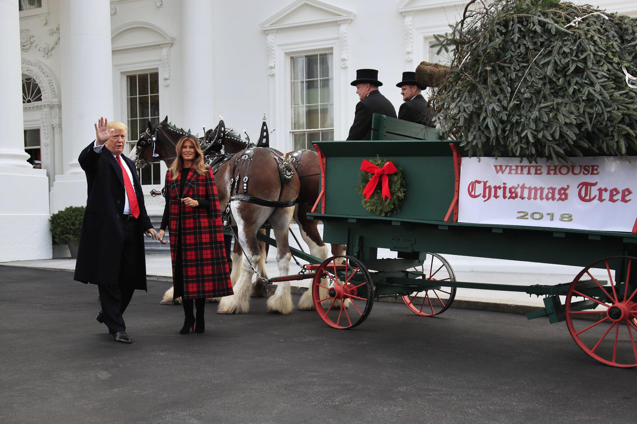 Bild zu Weihnachtsbaum für das Weiße Haus