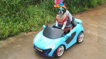 Bild zu Hunde, Auto, Cabrio