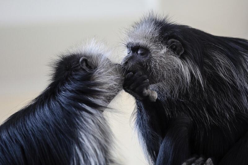 Bild zu Küssen in Denker-Pose