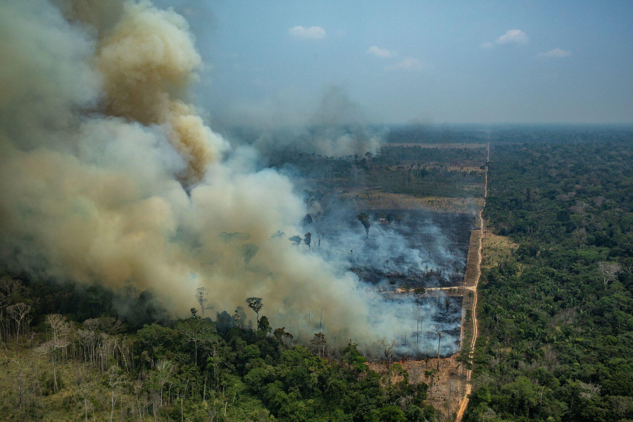 Bild zu Brände im Amazonas