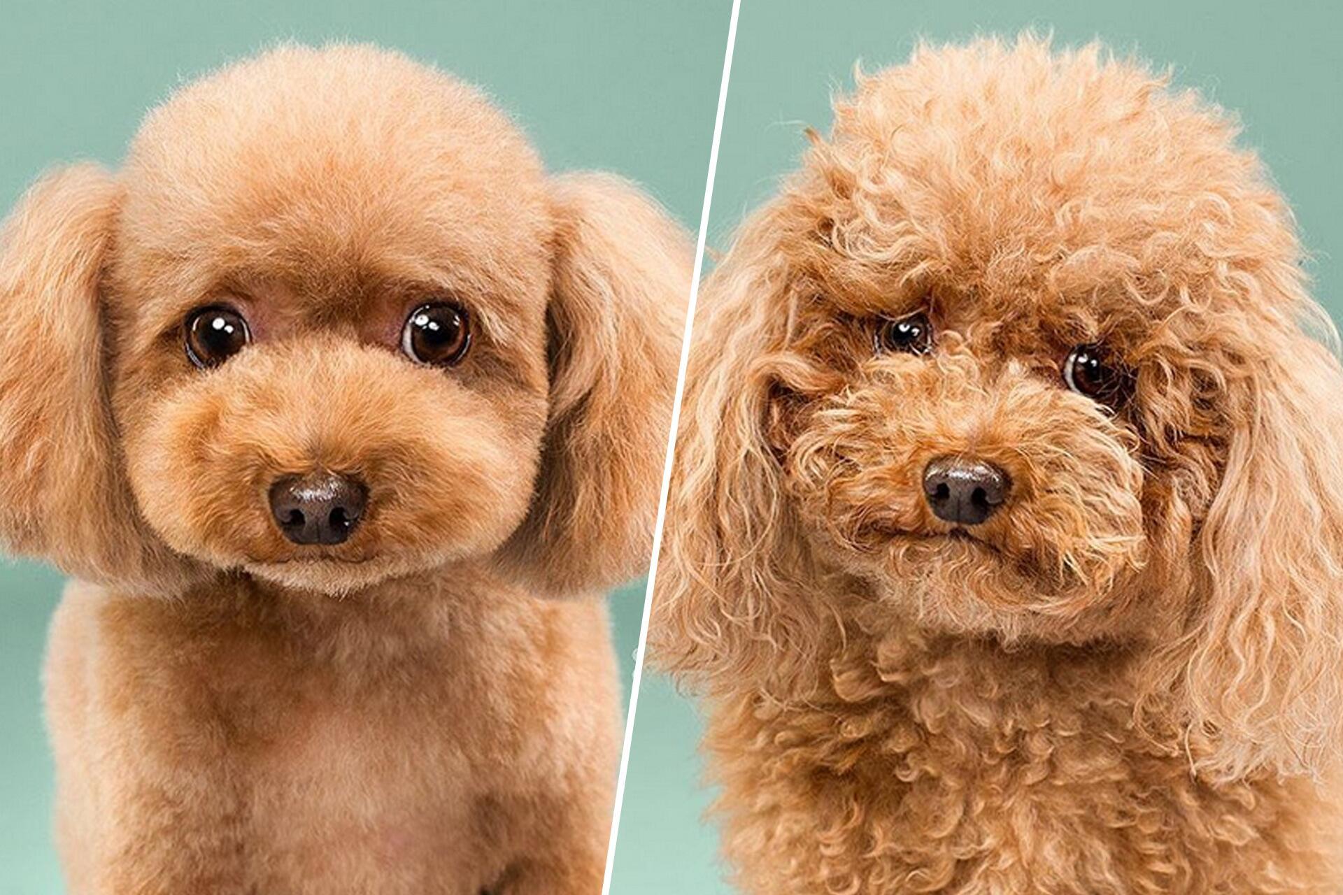 Bild zu Hund, Friseur, Haare, Fell, Kunst