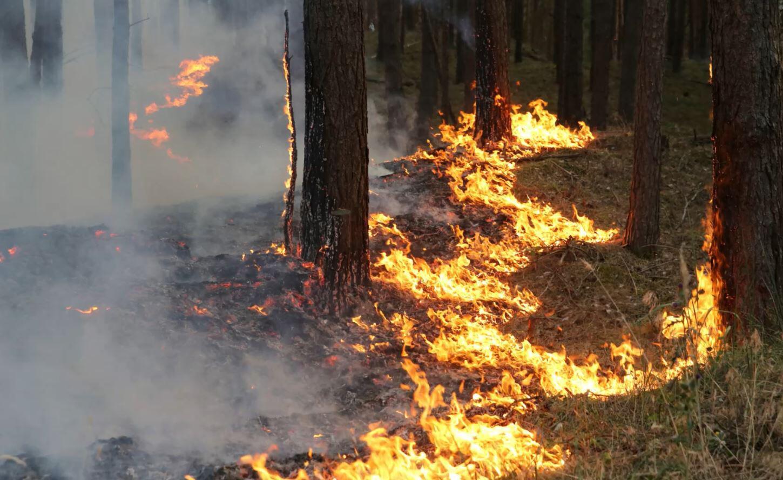 Bild zu Waldbrand, Mecklenburg-Vorpommern, Evakuierungen, Evakuierung, Lübtheen, Jessenitz, Feuerwehr