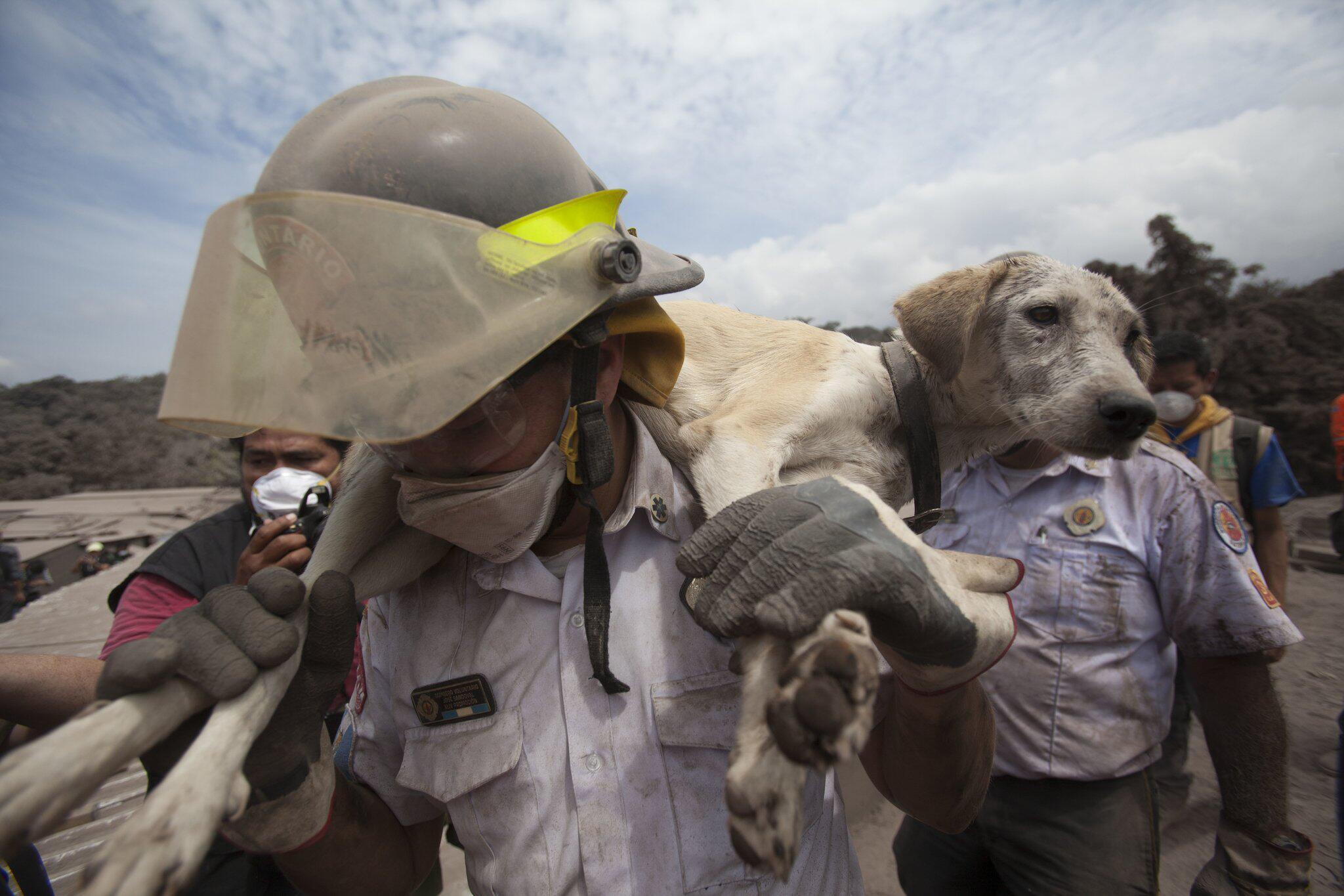 Bild zu Nach dem Ausbruch des Feuervulkans in Guatemala