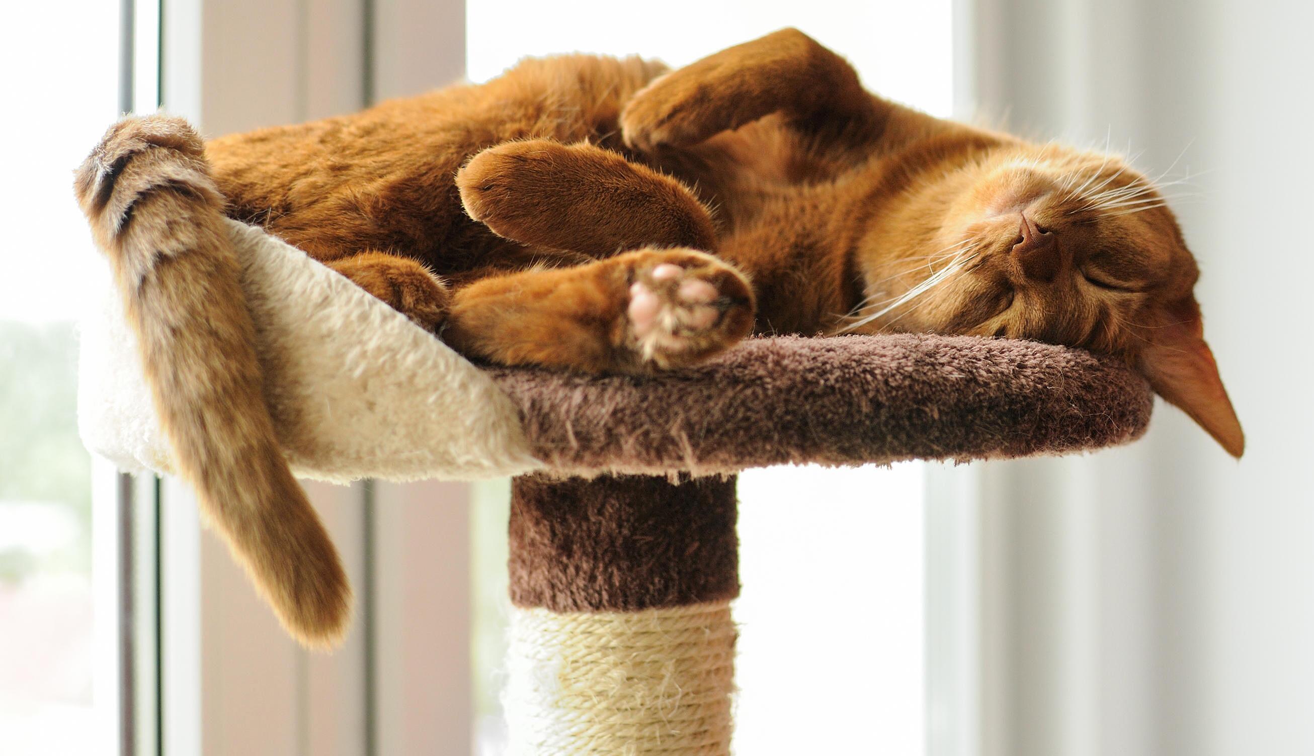 Bild zu Katze, Katzenhalter, Kratzbaum, Futterautomat, Katzenzubehör, Tiere