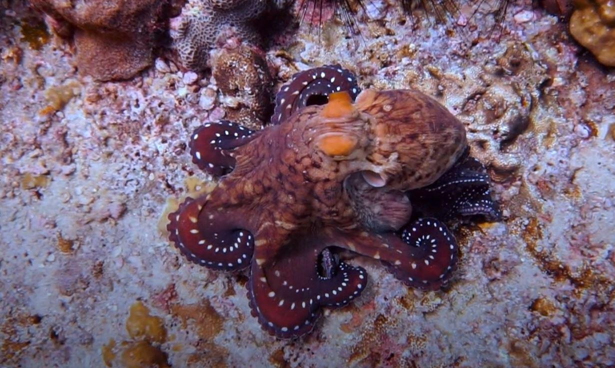Bild zu Tintenfisch