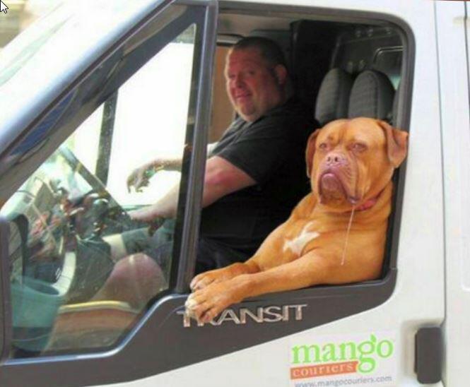Bild zu Hund, Video