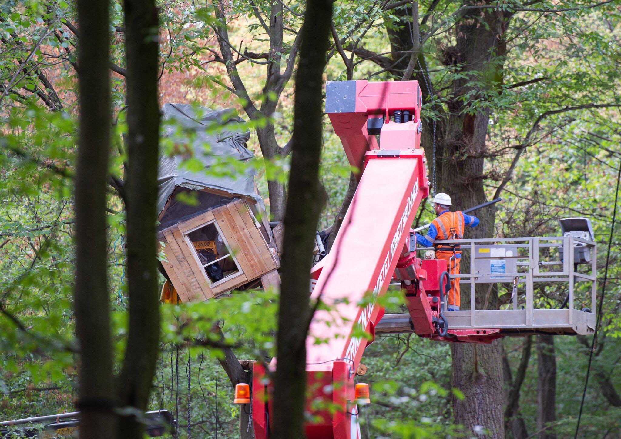 Bild zu Weitere Entwicklung im Hambacher Forst