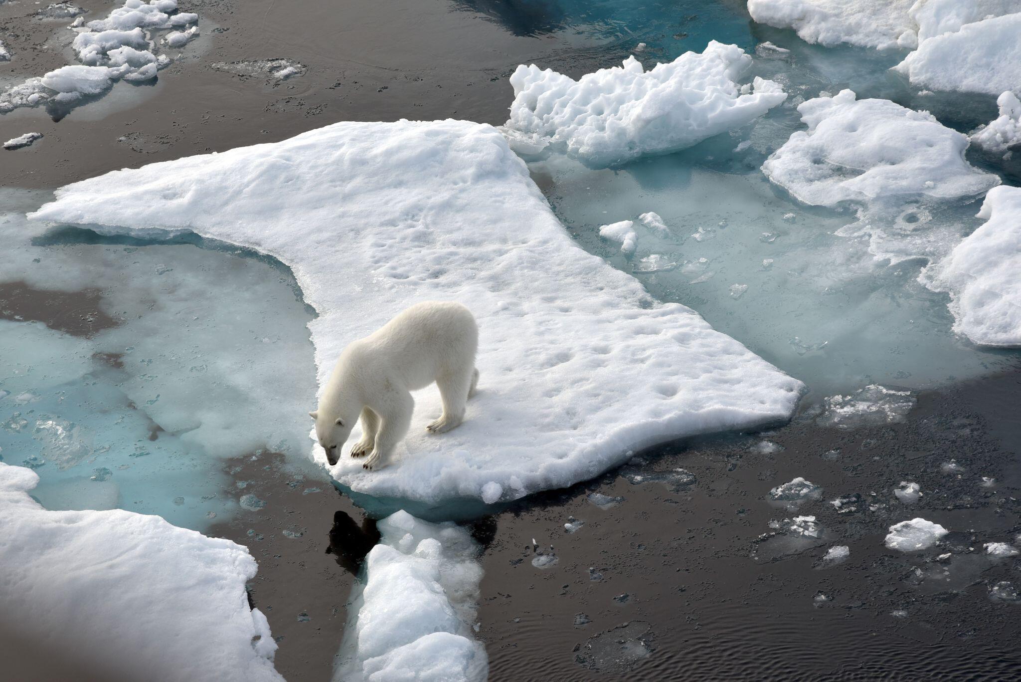 Bild zu Meereis der Arktis auf zweitkleinste Fläche geschrumpft