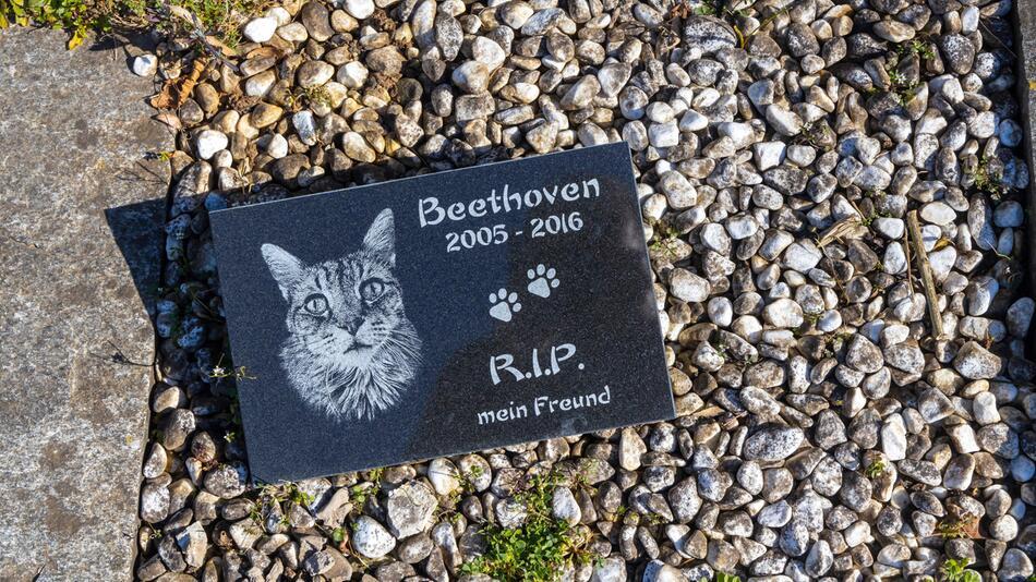 Grab einer Katze