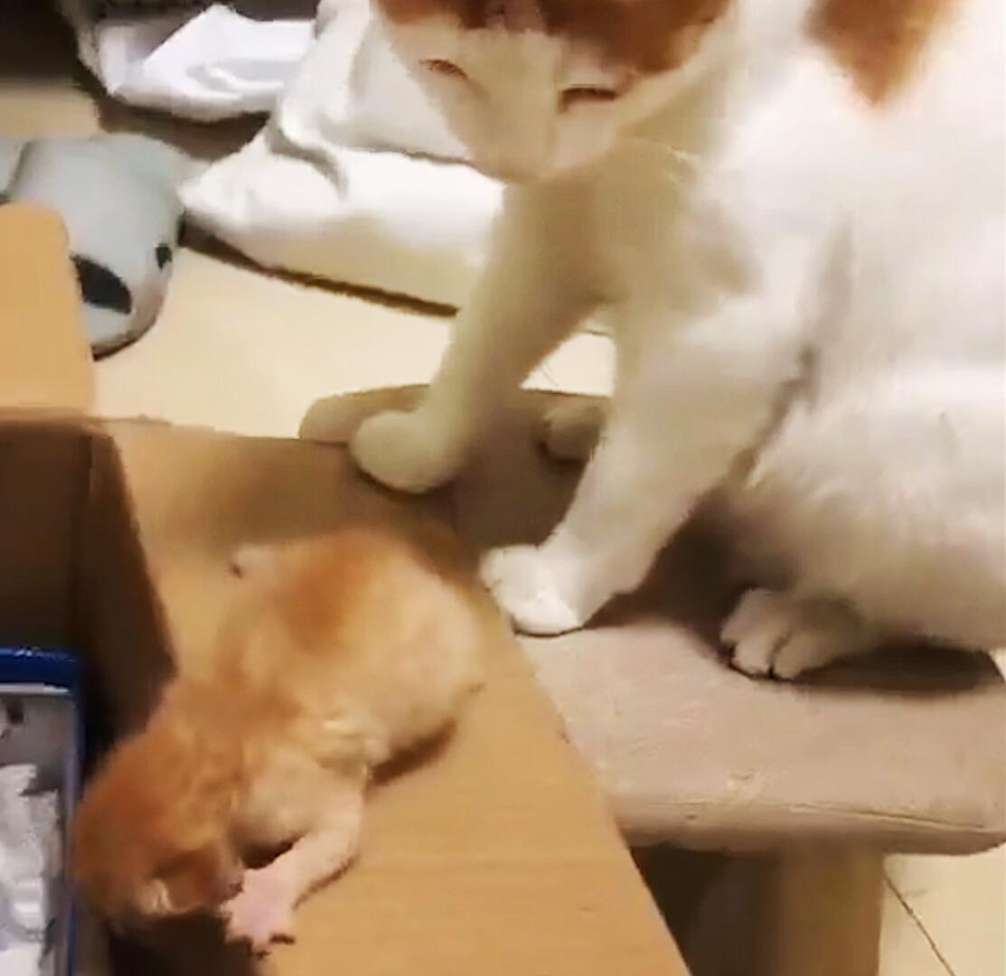 Bild zu Katzenmama