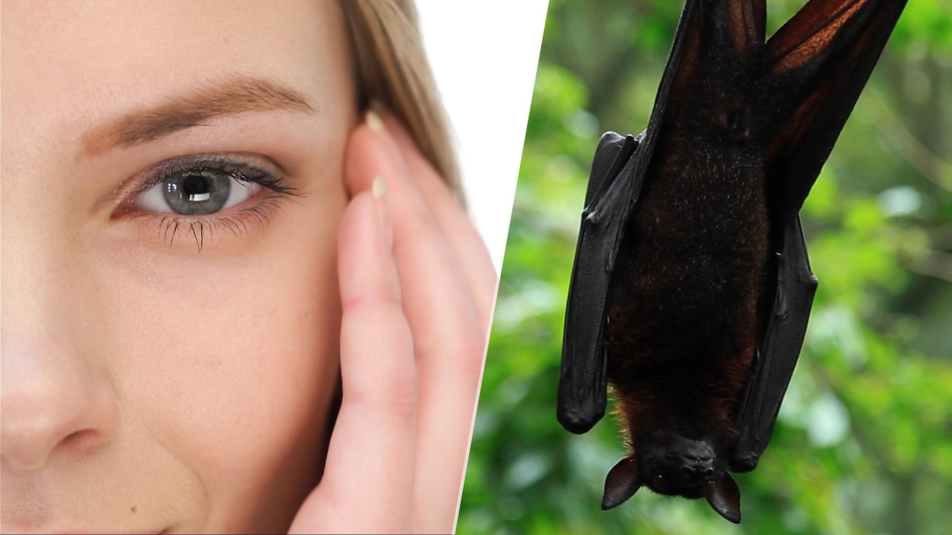 Bild zu Fledermaus