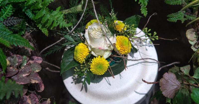 mini sorten und schwachw chsige pflanzen f rs urnengrab gmx at. Black Bedroom Furniture Sets. Home Design Ideas