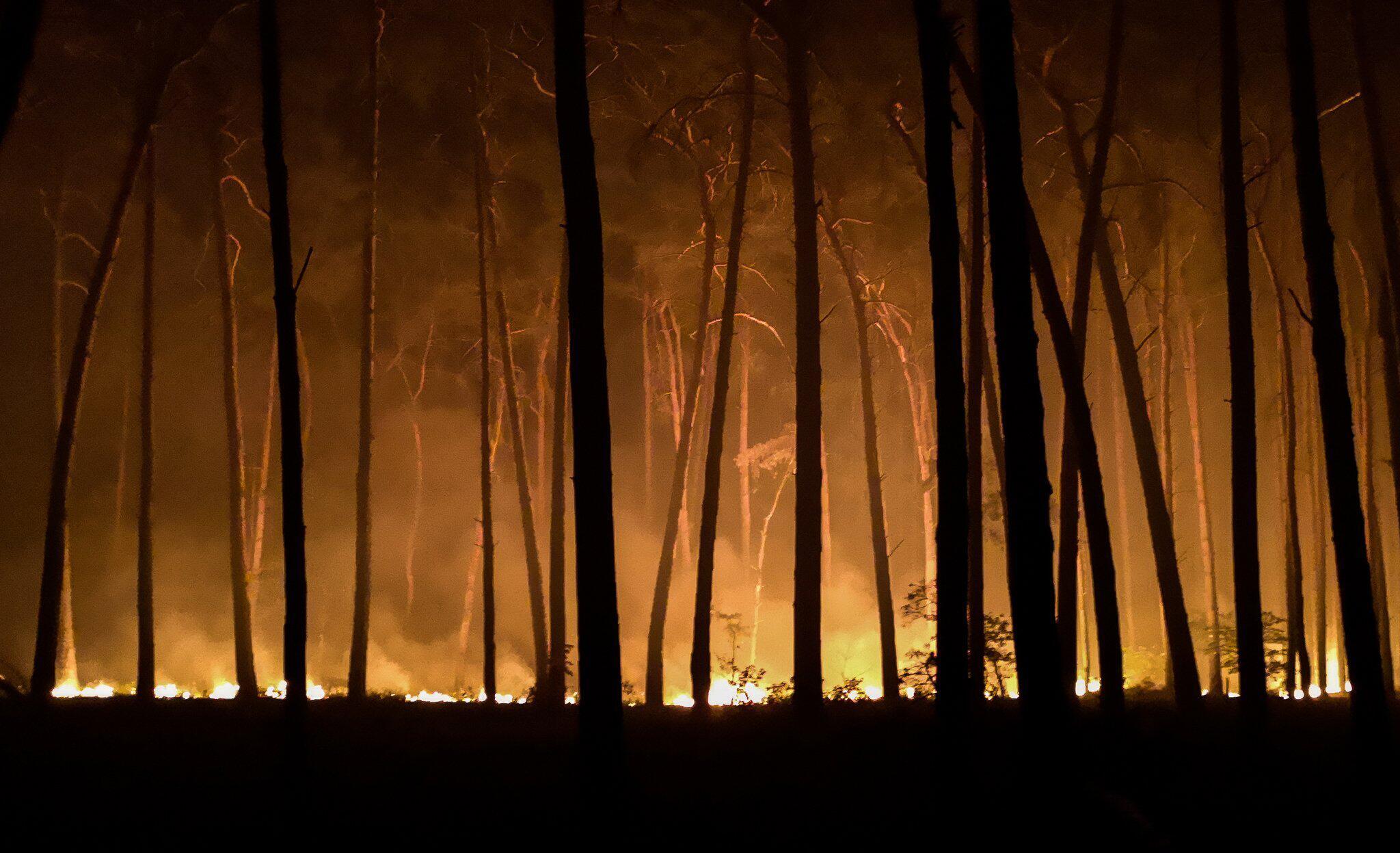 Bild zu Waldbrände, Jüterbog, Potsdam