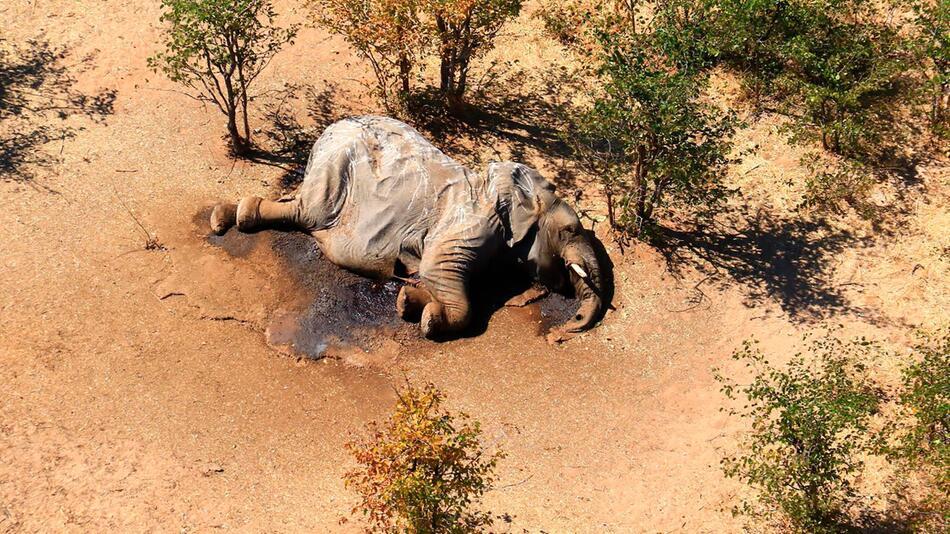 Massensterben von Elefanten in Botsuana