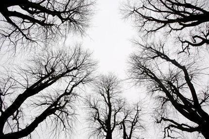 Lichtarmes Winterwetter
