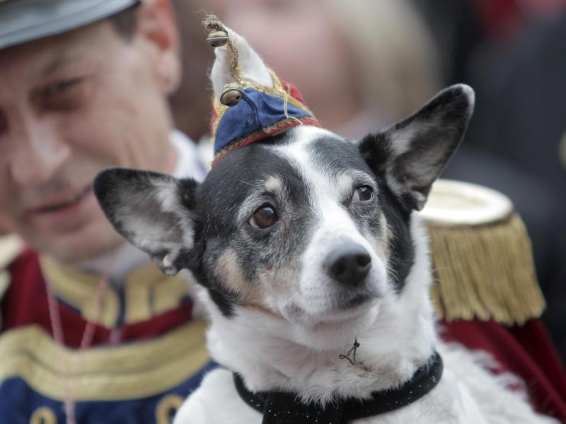 Bild zu Hund auf Karnevalsumzug