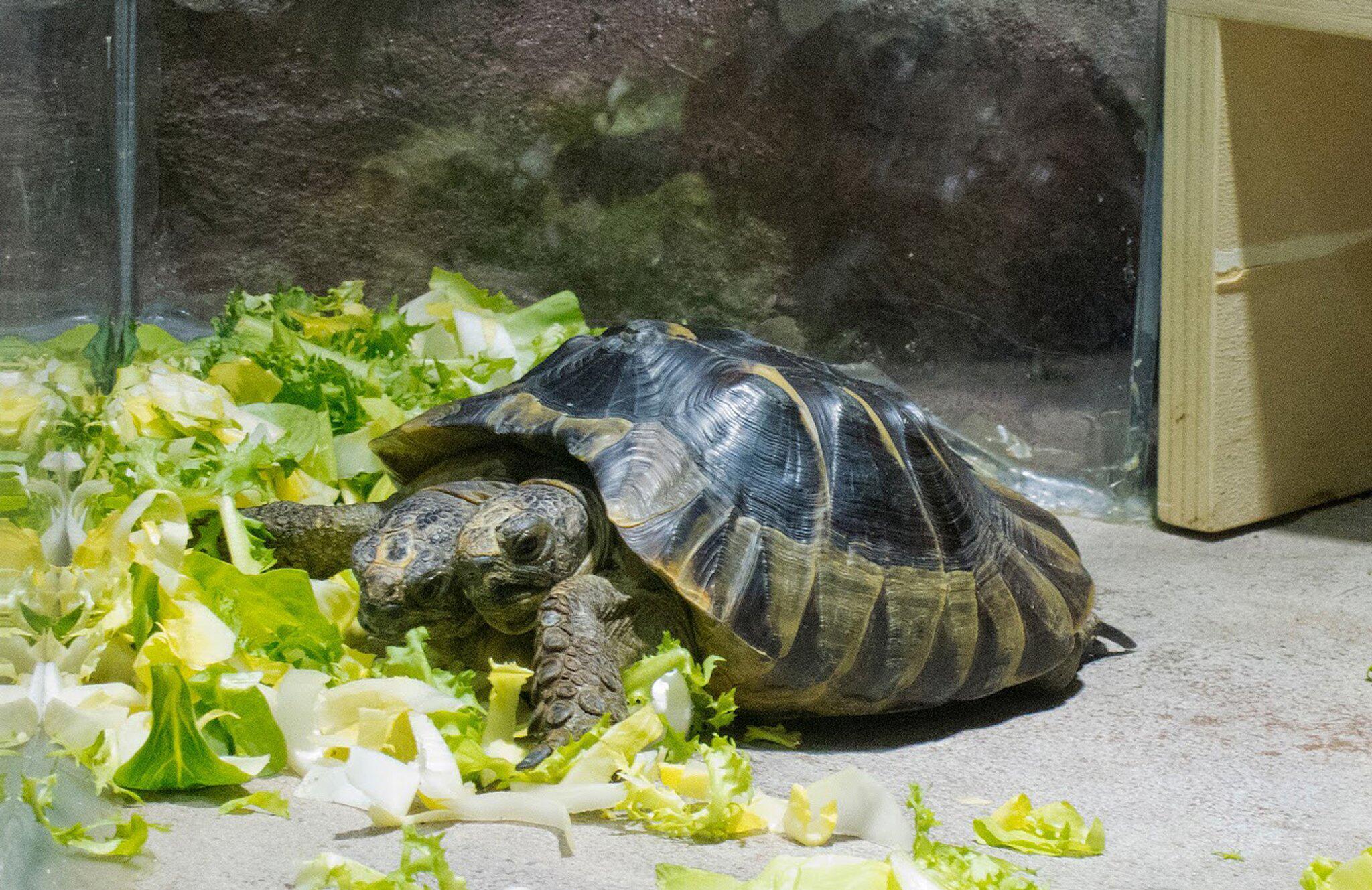 Atemberaubend Schildkrötenbilder Zum Ausmalen Bilder - Malvorlagen ...