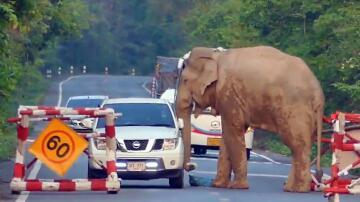 Bild zu Elefant