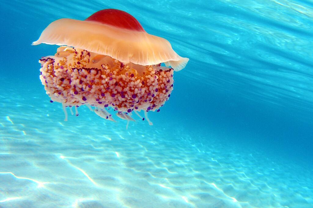 Tier, ungewöhnlich, seltsam, Meer, Land, Natur, Umwelt, Qualle, Fisch, Säugetier, fliegen, Wasser