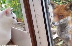 Wenn Fuchs und Katze sich Guten Tag sagen