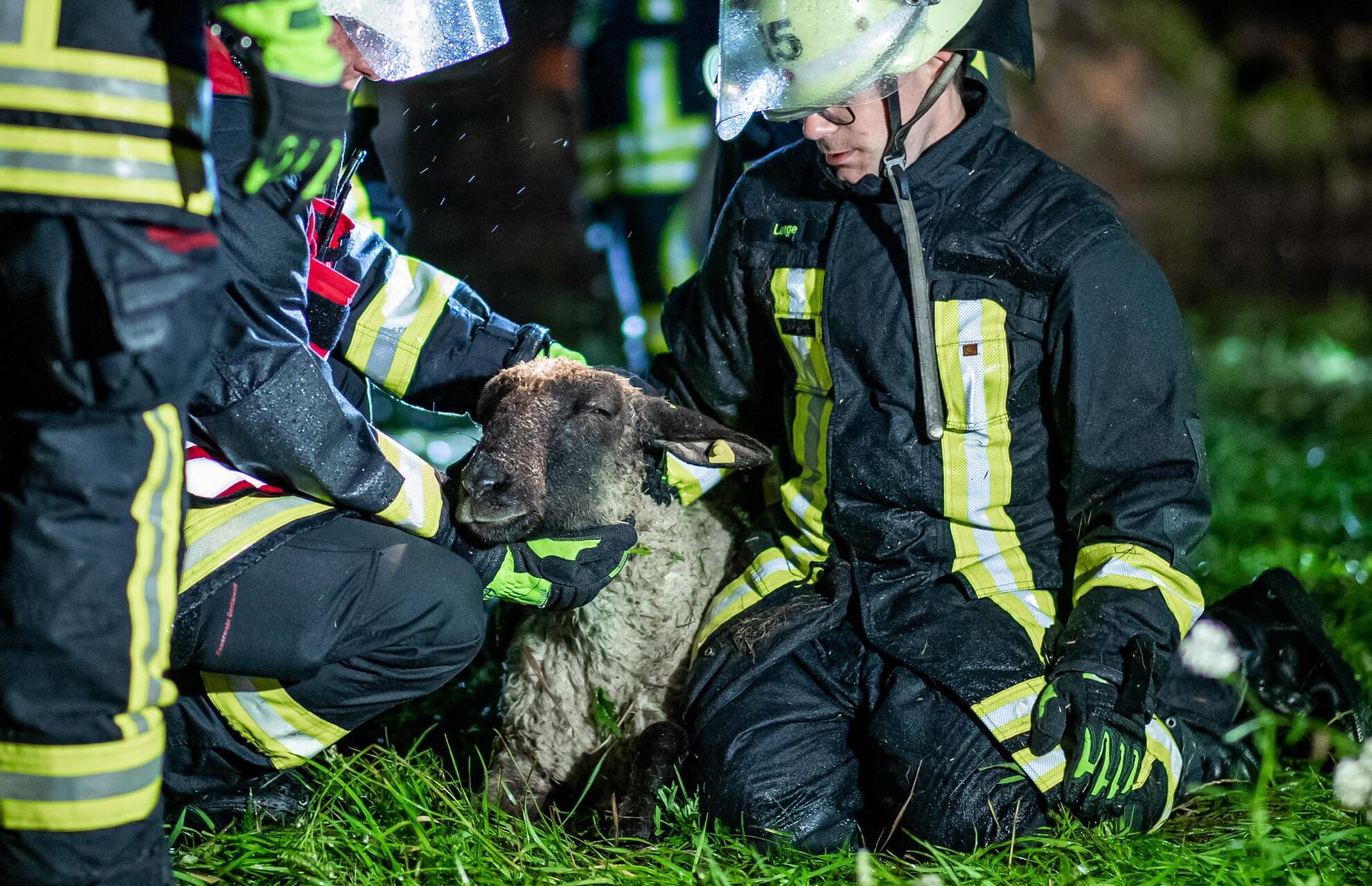 Bild zu Regen flutet Weide mit 300 Schafen - Feuerwehr setzt Rettungsboot