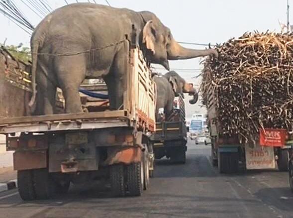 Bild zu Elefanten