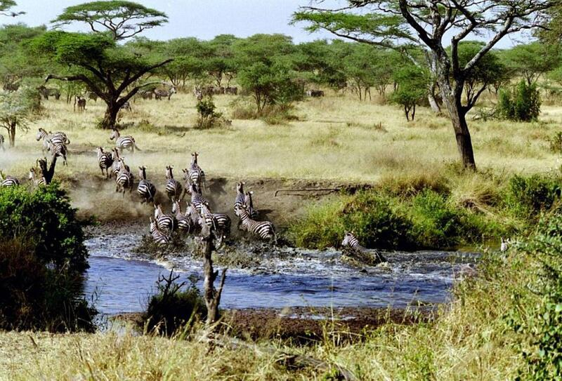 Bild zu Serengeti-Nationalpark in Tansania