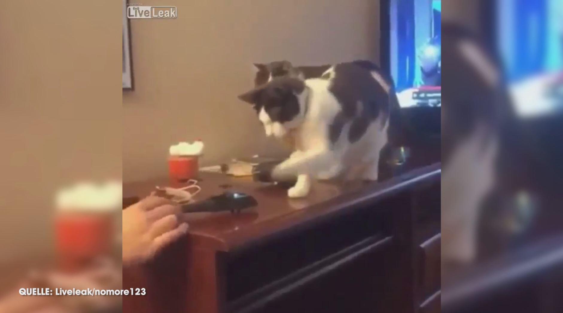 Bild zu Lustige Reaktion: Katze entledigt sich von nervigem Spielzeugheli