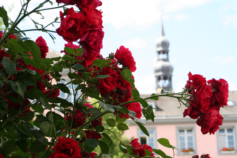 Bild zu Soest, Deutschland