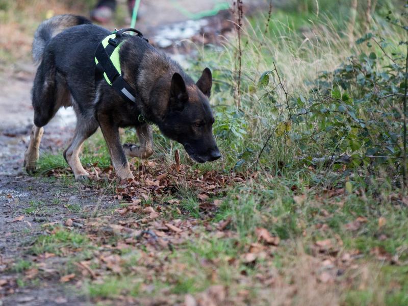Bild zu Giftköder-Suchhund