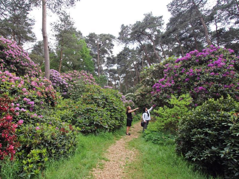 Bild zu Rhododendronpark Hobbie