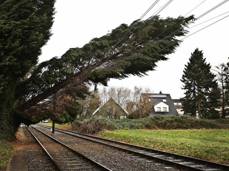 Bild zu Bäume an der Bahn