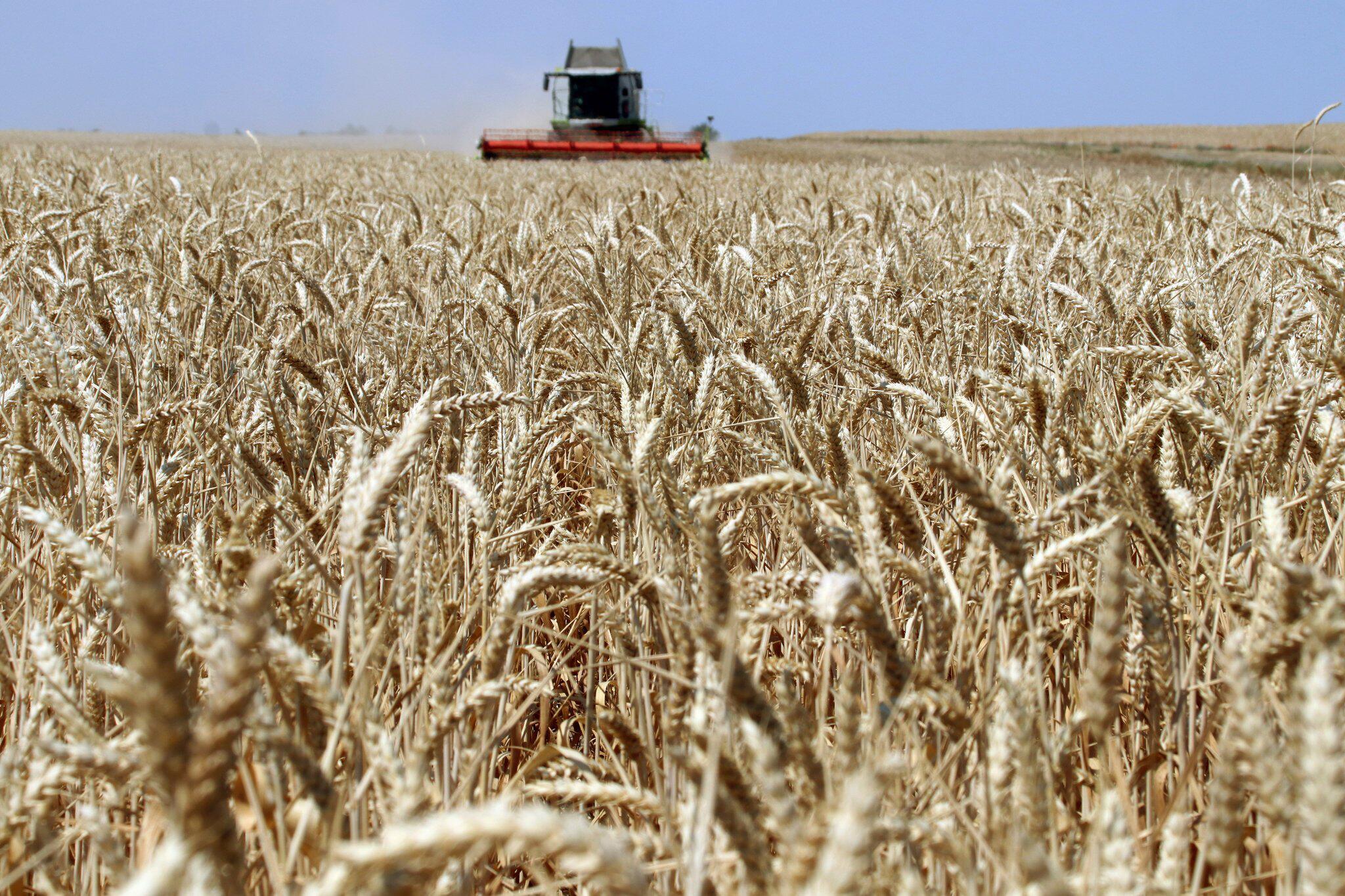 Bild zu Erntestatistik bestätigt massive Dürre-Einbußen bei Getreide