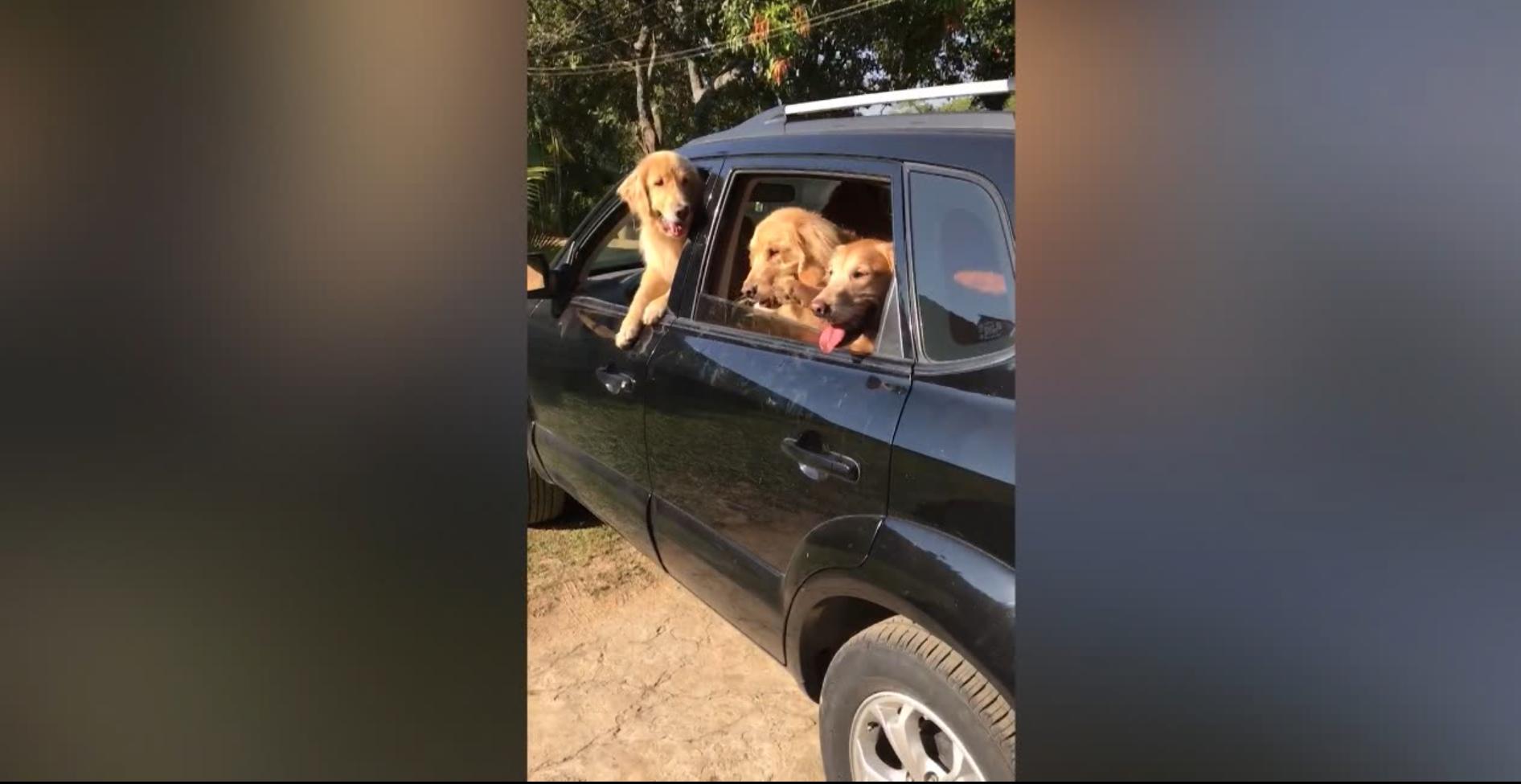Bild zu Auto, Hunde