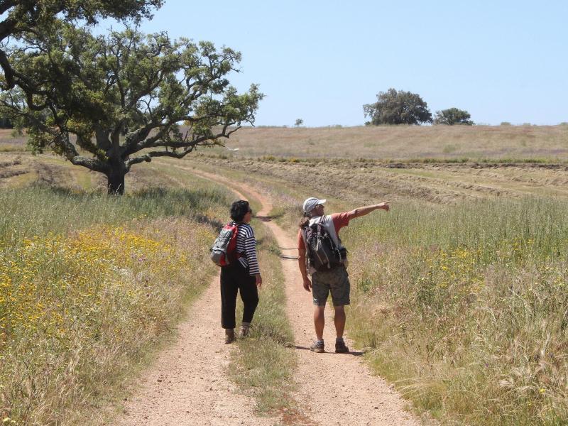 Bild zu Wanderer in Alentejo