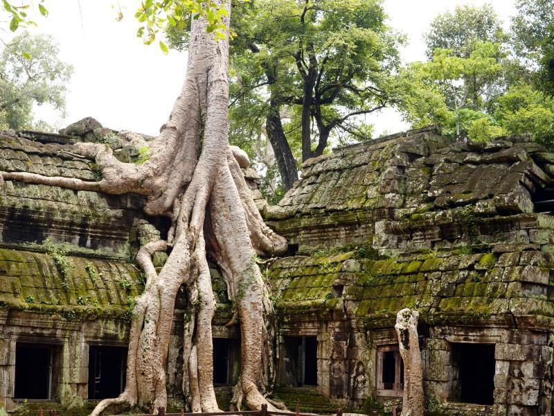 Bild zu Tempel Ta Prohm in Kambodscha