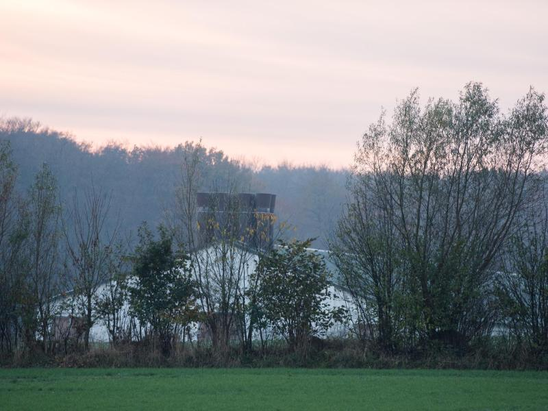 Bild zu Geflügelpest in Schleswig-Flensburg