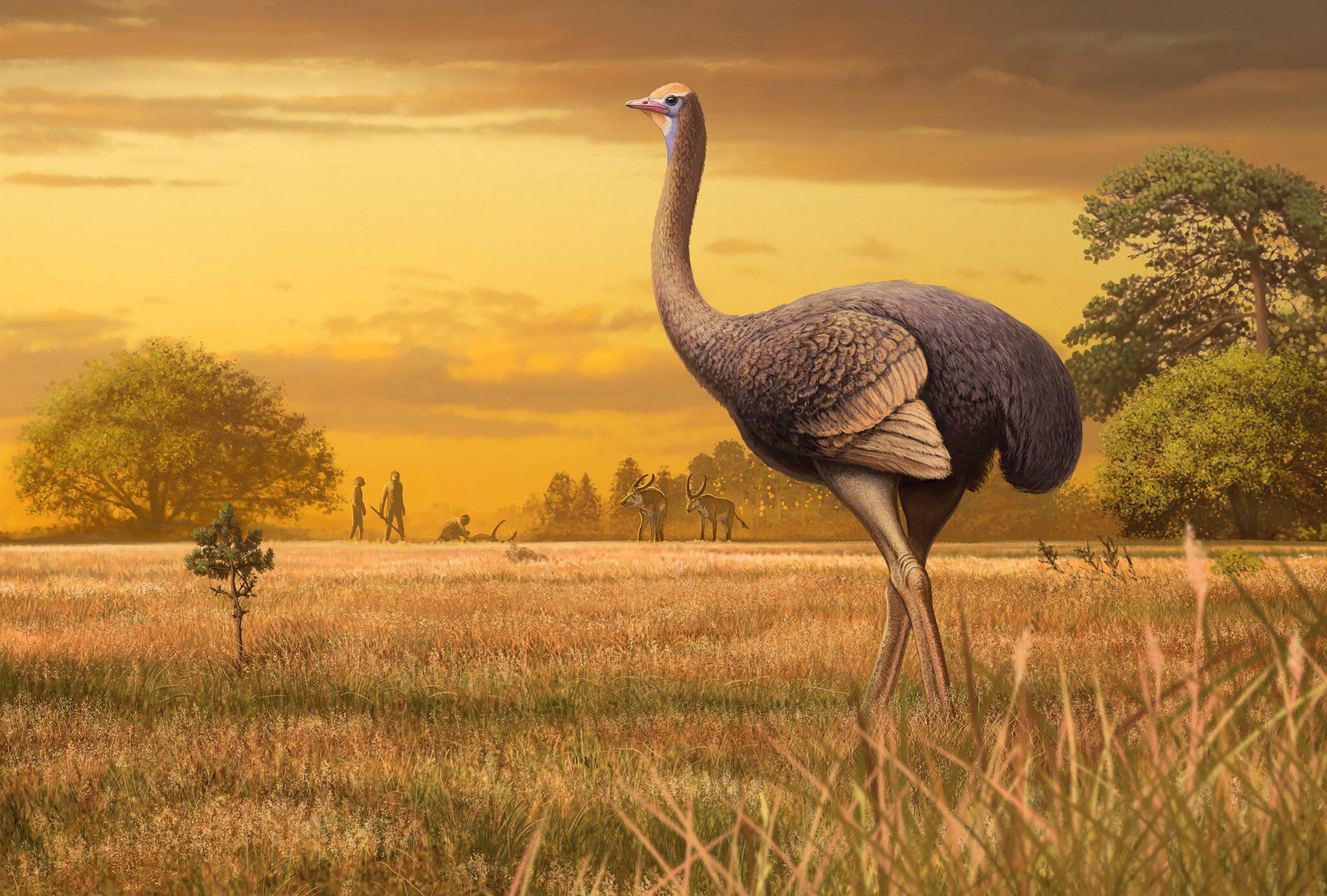 Bild zu Riesenvogel aus der Eiszeit